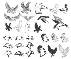 Set of birds illustrations. Eagle, duck, goose, chicken. Design elements for logo, label, badge, emblem, sign, menu, poster.