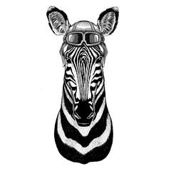 Zebra Horse Aviator, biker, motorcycle Hand drawn illustration for tattoo, emblem, badge, logo, patch
