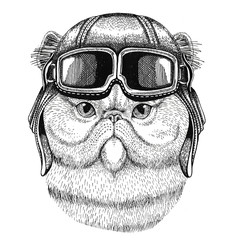 Portrait of fluffy persian cat wearing leather helmet Aviator, biker, motorcycle Hand drawn illustration for tattoo, emblem, badge, logo, patch