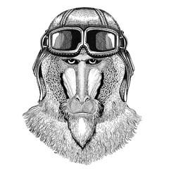 Monkey, baboon, dog-ape, ape wearing leather helmet Aviator, biker, motorcycle Hand drawn illustration for tattoo, emblem, badge, logo, patch