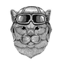 Brithish noble cat wearing leather helmet Aviator, biker, motorcycle Hand drawn illustration for tattoo, emblem, badge, logo, patch