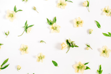 Beautiful yellow hellebore flower texture on white background. Flat lay, top view. Floral lifestyle composition.