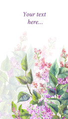 Purple lilac on a white background. Watercolor illustration