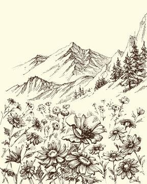Mountain landscape, flowers border sketch