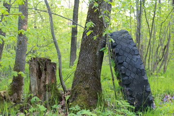 Tire in the woods