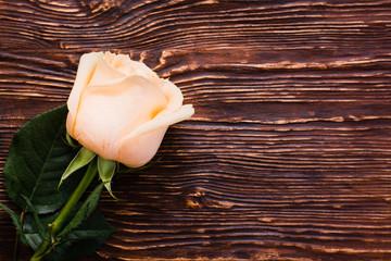 Свежая кремовая роза на деревянном фоне