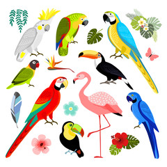 Set of exotic birds, isolated vector illustration