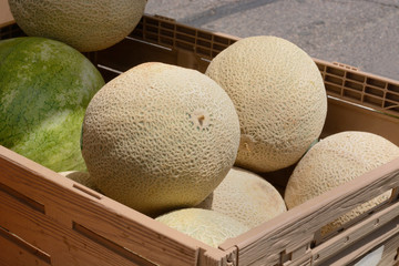 Cantaloupe and watermelon in crate at farmer's market