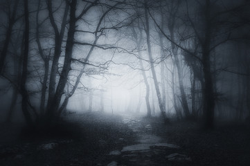 path in dark and scary forest