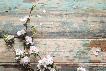 Apple blossom on old wooden background. Copy space.
