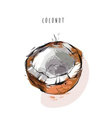 Hand drawn vector abstract exotic tropical fruit coconut illustration isolated on white background.Healthy lifestyle concept.