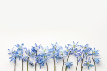Blue snowdrops flowers on white background