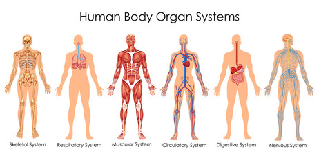 Medical Education Chart of Biology for Human Body Organ System Diagram