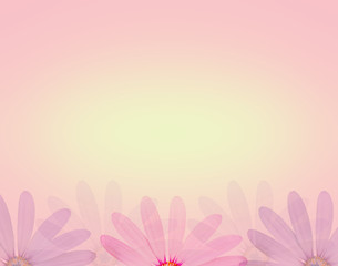 daisy flower in soft sweet color and blur style texture background