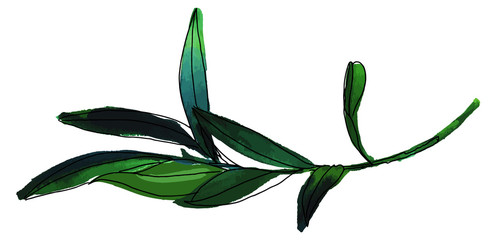 Vector and watercolor drawing of green olive branch on white