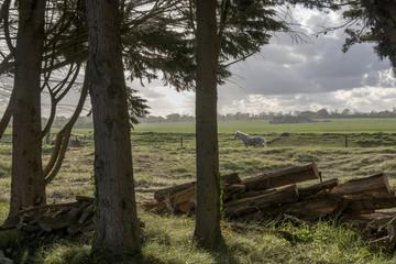 Poster Horses paard in de wei