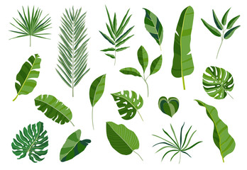 Set of tropical leaves. Different green leaf collection. Colorful vector illustration on white background in cartoon style.