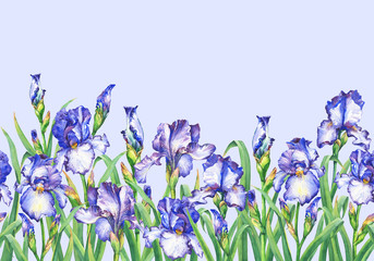 Floral seamless border with flowering violet  irises, on blue background. Panoramic horizontal view. Isolated watercolor hand drawn painting illustration. Design for fabric, wrap paper or wallpaper.