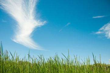 Spring nature background with grass and blue sky in the back. Cloud shaped bird