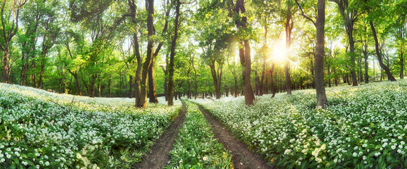 Foto op Plexiglas Pistache Panorama of Forest green landscape with white flowers and path