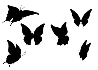 silhouette (butterfly)