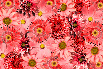 Vintage background with red flowers collage mix gerbera, chrysanthemum, dahlia, primula, decorative sunflower retro styled