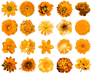 Mix collage of natural and surreal orange flowers 20 in 1: peony, dahlia, primula, aster, daisy, rose, gerbera, clove, chrysanthemum, cornflower, flax, pelargonium isolated on white