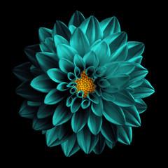 Fotobehang Dahlia Surreal dark chrome turquoise flower dahlia macro isolated on black