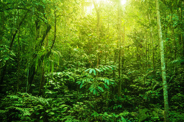 Fantastic tropical dense forest