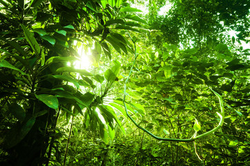 Natural tropical green forest