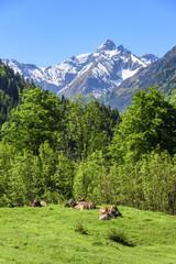 sonniger Platz auf einer Weide im Oberallgäu