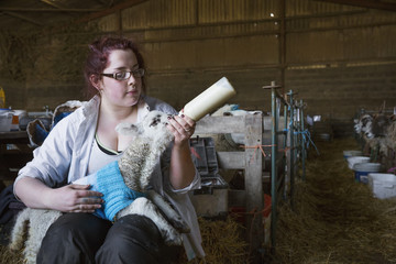 Young woman sitting in a barn, feeding a newborn lamb with milk from a bottle. Lamb dressed in a knitted blue jumper.
