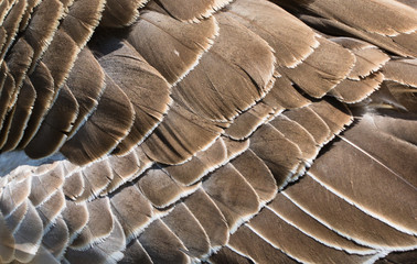 brown goose feathers texture motif pattern