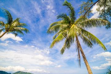 Tropical beach and coconut palms tree blue sky