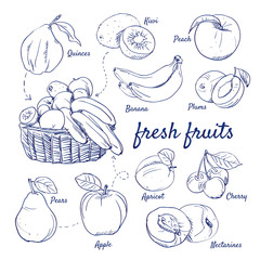 Doodle set of fresh fruits - Kiwi, Quinces, Peach, Banana, Plums, Pears, Apple, Apricot, Cherry, Nectarines, basket, hand-drawn. Vector sketch illustration isolated over white background.