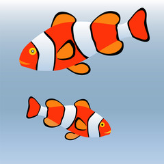 clown fish or anemone fish