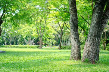 trees in the park with green grass and sunlight, fresh green nature background. Wall mural