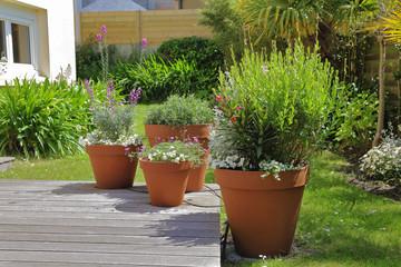 système d'arrosage de plantes extérieures en pot avec goutteurs relier à un réseau de tuyaux