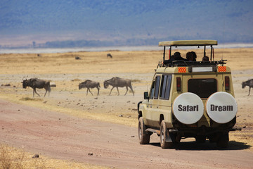 Safari en Afrique terre d'aventure