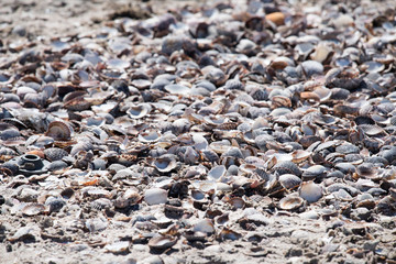 many white shells background texture