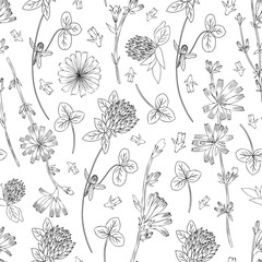 Seamless vector floral pattern, Chicory flower, medical endive field plant, Red clover, shamrock hand drawn illustration, doodle sketch isolated on white background, for design packaging, cosmetics