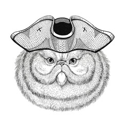 Portrait of fluffy persian cat wearing pirate hat Cocked hat, tricorn Sailor, seaman, mariner, or seafarer