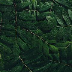 Creative layout made of green leaves. Flat lay. Nature concept.