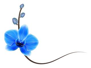 Реалистичная орхидея, уголок