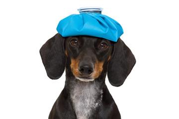ill sick dog with illness