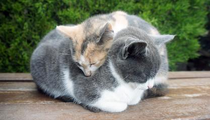 Two little sleepy kittens. Wildlife Photography.