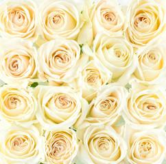 Beautiful cream roses background