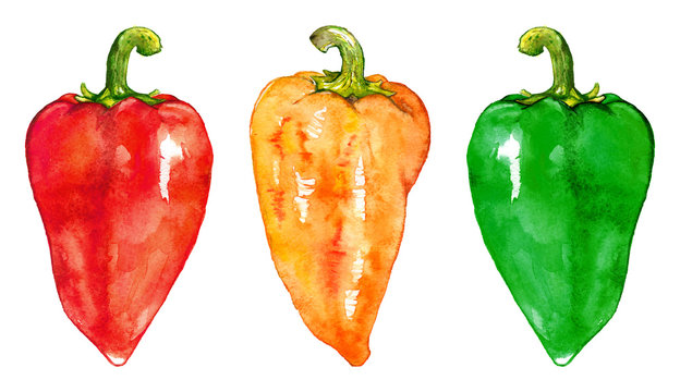 Watercolor sweet bell Bulgarian pepper vegetable set isolated