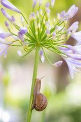 Purple snail fantasies