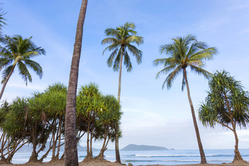 palm trees on the beach in summer season.